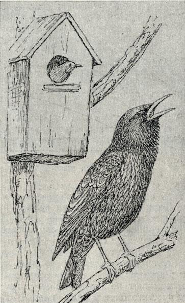 Первый его рисунок дворовые