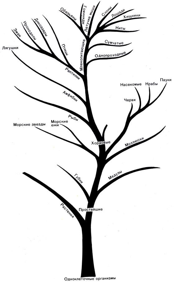 'Древо жизни', показывающее