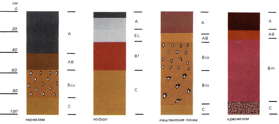 Схема строения почвенного