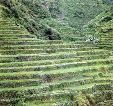 Террасированные поля на склонах гор