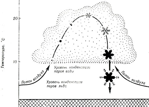 Схема возникновения и роста